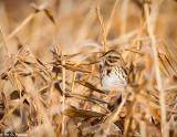 Blending Sparrow