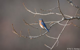 Lonely Bluebird