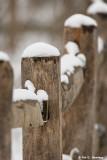 Snowy fenceline
