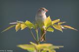 Symmetrical perch