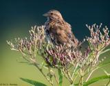Bird and buds