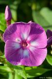 Flower in morning sun