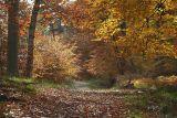 Féerie en forêt de Fontainebleau_0990.jpg