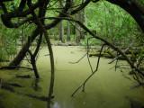 Dammen bakom simhallen Varberg 27.5-07