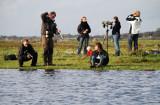 Brednäbbad simsnäppa och fotografer Lynga 23.9-07