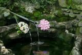 Buchete/Flowers
