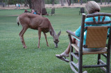 Front lawn of the Zion Lodge at Zion National Park