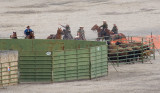 z_MG_4441 Captured bison in first holding pen.jpg