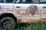 zzP1000646 Bison on car - raw uncropped.jpg