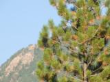 zP1010925 Fz50 lens test - tree branches 420 plus 1-7 teleconverter.jpg