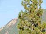 zP1010924 Fz50 lens test - tree branches - 300mm plus 1-7 teleconverter.jpg
