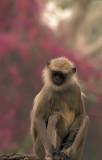 Monkey in Mangalore Gardens