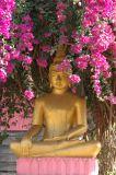 Buddha likes pink.