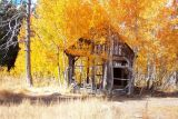 Fall Colors - Shack on Fire