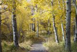 Aspen Path