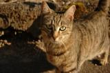 Hegenheim cat