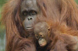 0003c: The Zoo of Northwest Florida