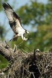 0002e:  Yellow River Osprey Nest