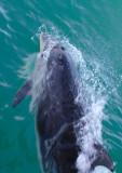 BDU06_3030-Dolphin.jpg