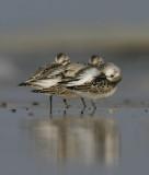 DANISH BIRDS 2006