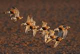 DANISH BIRDS 2007
