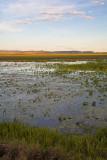 Wetlands of Hawk Dreaming at sunset