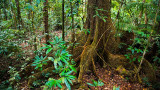 Daintree rainforest 1