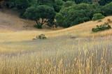 Yellow and Purple Grass