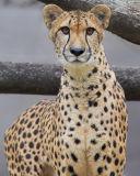 Zoos, Animals & Aquaria