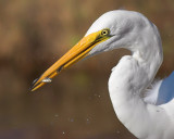 Egret gets Two!