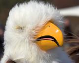 Rare Eagle Species