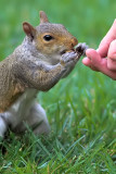 Squirrel Story - Part 4
