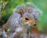 Squirrel Story - Part 3