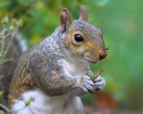 Squirrel Story - Part 2
