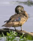 Injured Beak