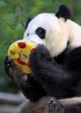Panda Treat