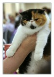 CFA-Iams Cat Championship @ MSG