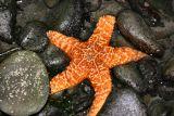 orange star.jpg