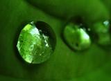 greendrop.jpg