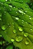 raindrop2.jpg