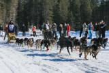 1Run Black Dogs Run.jpg