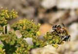 Interesting Bee