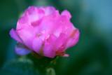 1Prickly Pear Blossom1.jpg