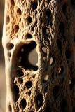 1Cholla Skeleton.jpg