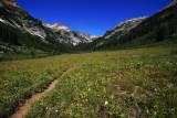 Spider Meadows