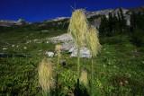 Upper Meadow