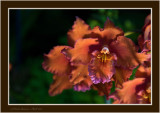 The Incredible, Amazing World of Orchids ...