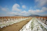 Vineyard, November 2006
