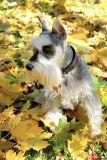 Fall Dawg