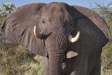 Southern Africa - 2007